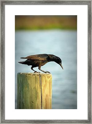 Over The Edge Framed Print by Mandy Shupp