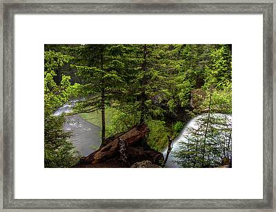 Over The Top Of Koosah Falls  Framed Print by Marnie Patchett