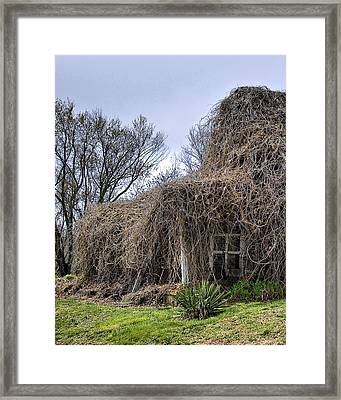 Framed Print featuring the photograph Overgrown by Alan Raasch