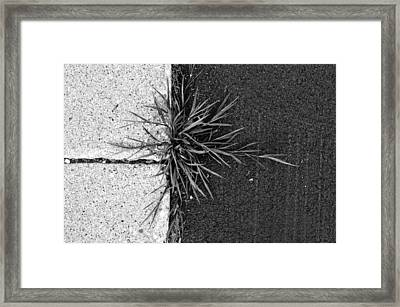 Overgrowth ...abound Framed Print by Tom Druin