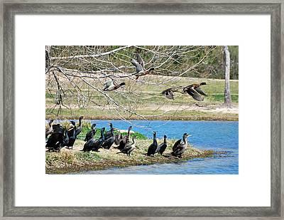Framed Print featuring the photograph Overhead by Teresa Blanton