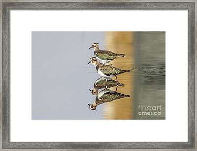 Framed Print featuring the photograph Overlappwing by Paul Farnfield