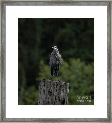 Overlooker  Framed Print by Rod Wiens