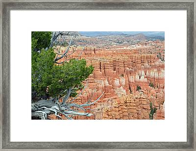 Framed Print featuring the photograph Overlooking Bryce Canyon by Bruce Gourley