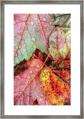 Overnight Rain Leaves Framed Print