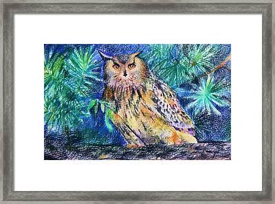 owl Framed Print by Anastasia Michaels