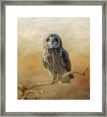 Framed Print featuring the photograph Owl  by Angie Vogel