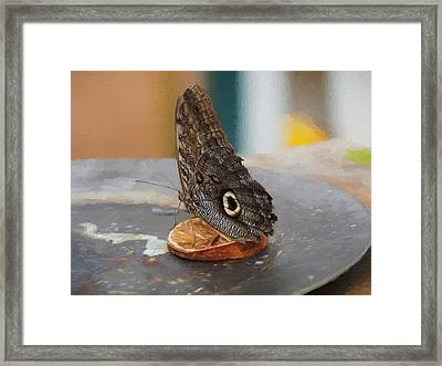 Framed Print featuring the photograph Owl Butterfly-1 by Paul Gulliver