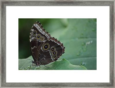 Owl Butterfly Framed Print by Linda Geiger