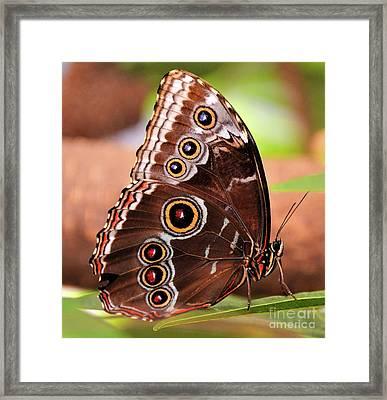 Owl Butterfly Portrait Framed Print