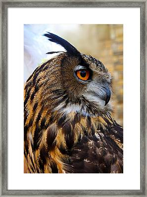 Owl-cry Framed Print