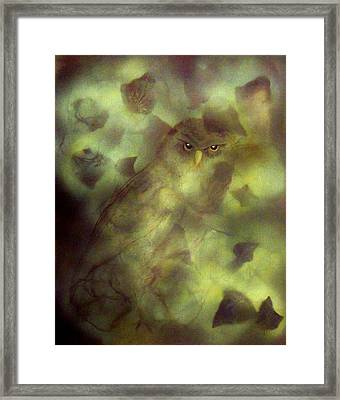 Owl Eyes Framed Print by Lynda McDonald
