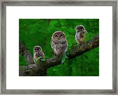 Owl Family Framed Print by Ron Jones