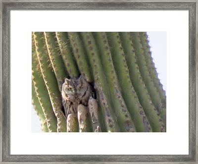 Owl In Cactus Burrow Framed Print