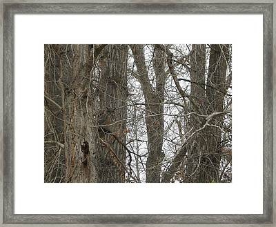 Owl In Camouflage Framed Print