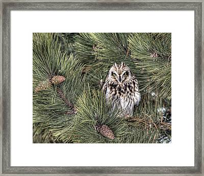 Owl In The Pine Framed Print by CR  Courson