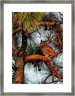 Owl In The Very Last Sunset Light Framed Print