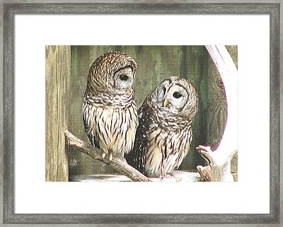 Owl Love You Forever Framed Print by Martha Ayotte
