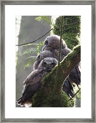Owl Morning Framed Print
