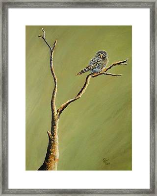 Owl On A Branch Framed Print