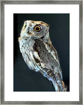 Owl On Black Framed Print by Michael Riley