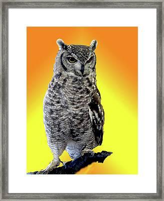 Owl On Branch Framed Print by Michael Riley