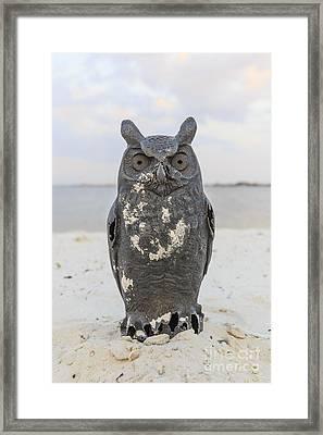 Owl On The Beach Framed Print