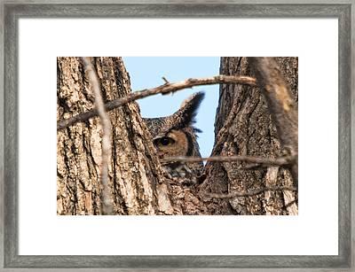 Owl Peek Framed Print