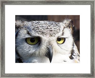 Owl Reflections Framed Print by Vera Gadman