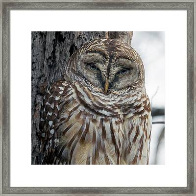 Owl See You Soon Framed Print by Betsy Knapp