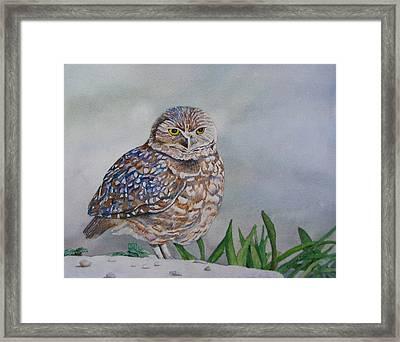 Owl Framed Print by Sharon Farber