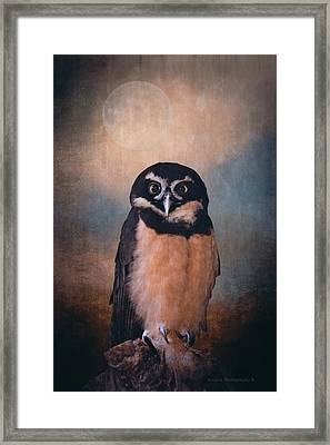 Owl Spirit Framed Print by Maria Angelica Maira