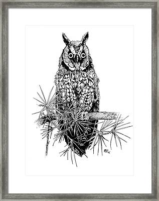 owl Framed Print by Stephen Taylor