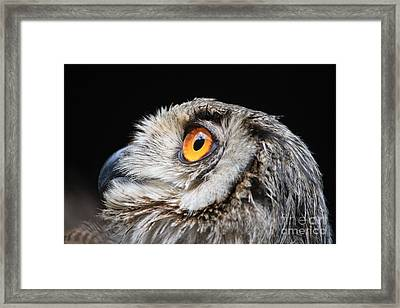 Owl The Grand-duc Framed Print by Mary-Lee Sanders