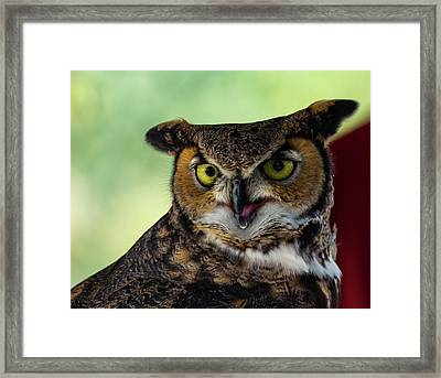 Owl Tongue Framed Print