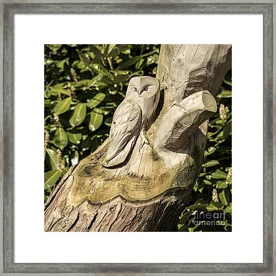 Owl Tree  Framed Print