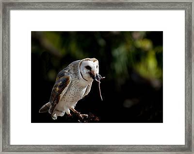 Owl Versus Mouse Framed Print