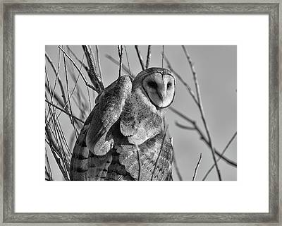 Owl Whites Framed Print