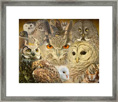 Owl You Need Is Love Framed Print by Heather King