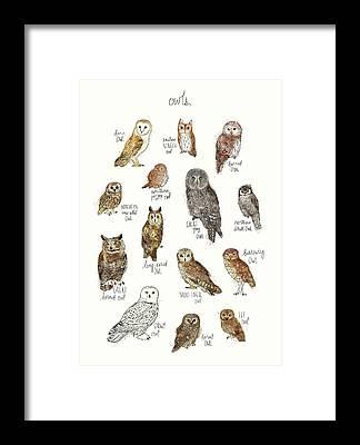 Whet Owl Framed Prints