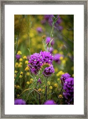 Framed Print featuring the photograph Owl's Clover by Peter Tellone