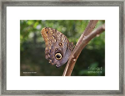 Owls Don't Always Have Feathers Framed Print by Shelley Jones