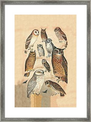 Owls Framed Print by Eric Kempson
