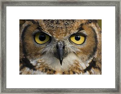 Owls Eyes Framed Print by Pixie Copley