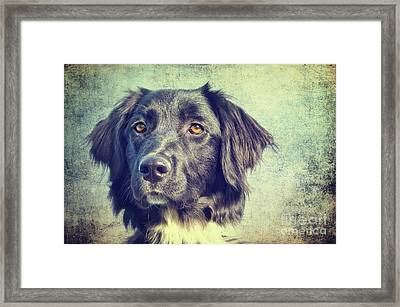 Owtscharka Mix Framed Print by Angela Doelling AD DESIGN Photo and PhotoArt