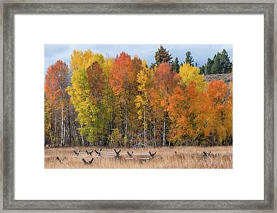 Framed Print featuring the photograph Oxbow Fall Colors by Chuck Jason