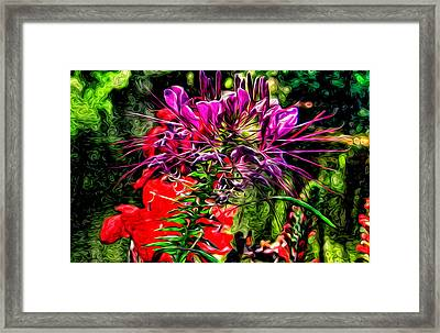 Oy Vey So Pretty Framed Print by Kevin  Sherf