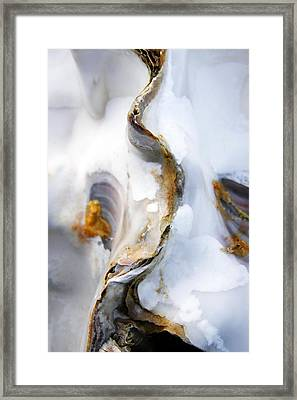 Framed Print featuring the photograph Oyster by Richard George