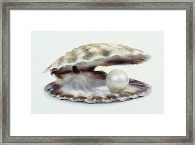 Oyster With Pearl Framed Print
