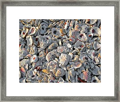 Oysters Shells Framed Print